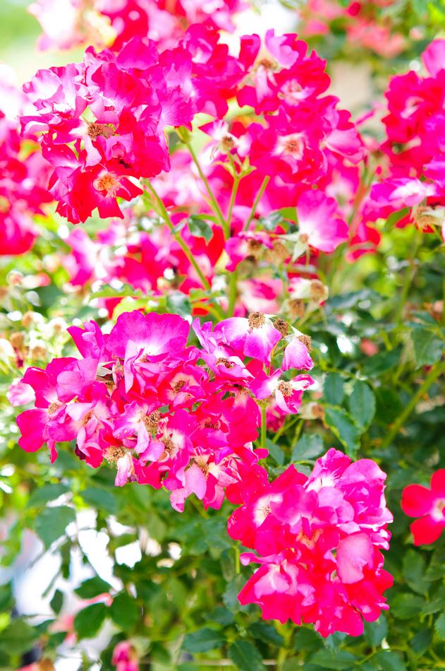 andersen_art_garden-018
