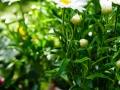 andersen_art_garden-035