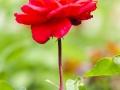 andersen_art_garden-094_7185084801