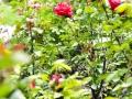 andersen_art_garden-095_7370322596