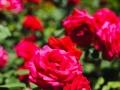 andersen_art_garden-126_7185109313