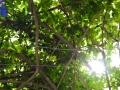 andersen_art_garden-133_7370274138