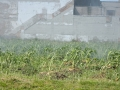 Grow_Saginaw_and_the_Fire_Department_5910523427