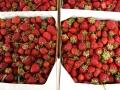Strawberry_Festival_2011-5_5861589191