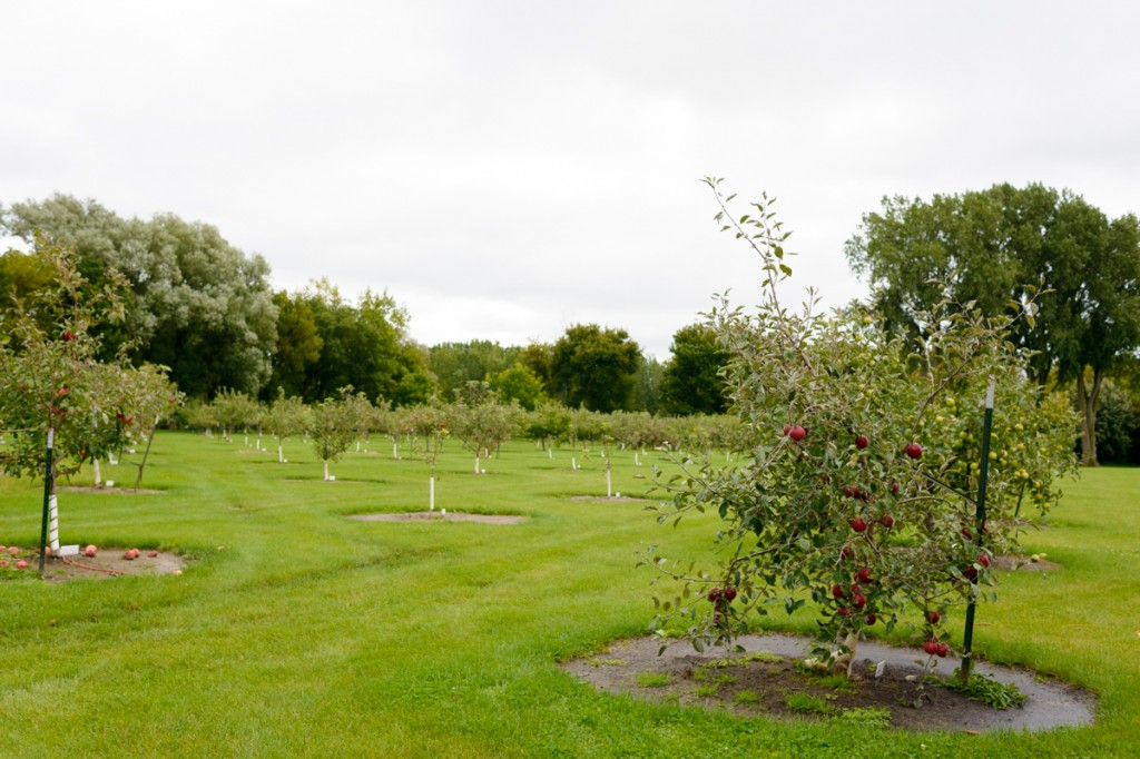 apple valley orchard saginaw - 01