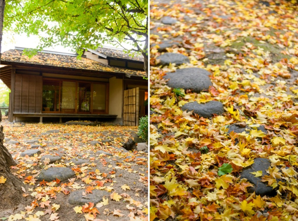 japanese cultural center saginaw mi - fall - 16