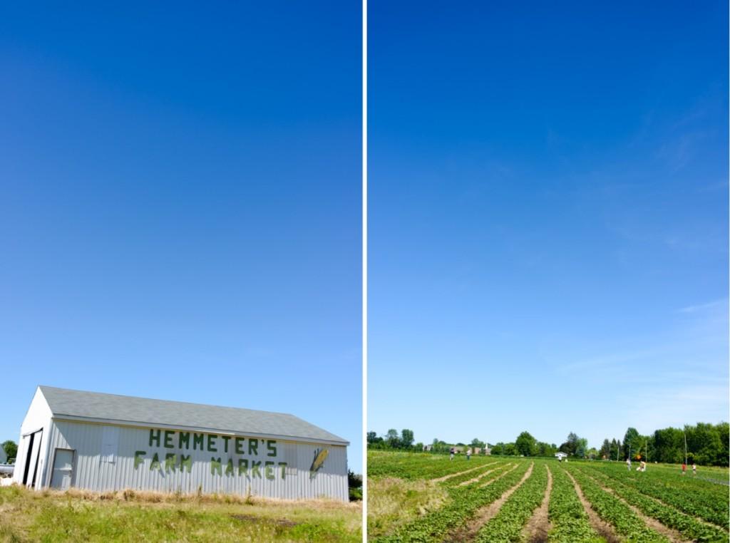 hemmeter strawberry picking-002