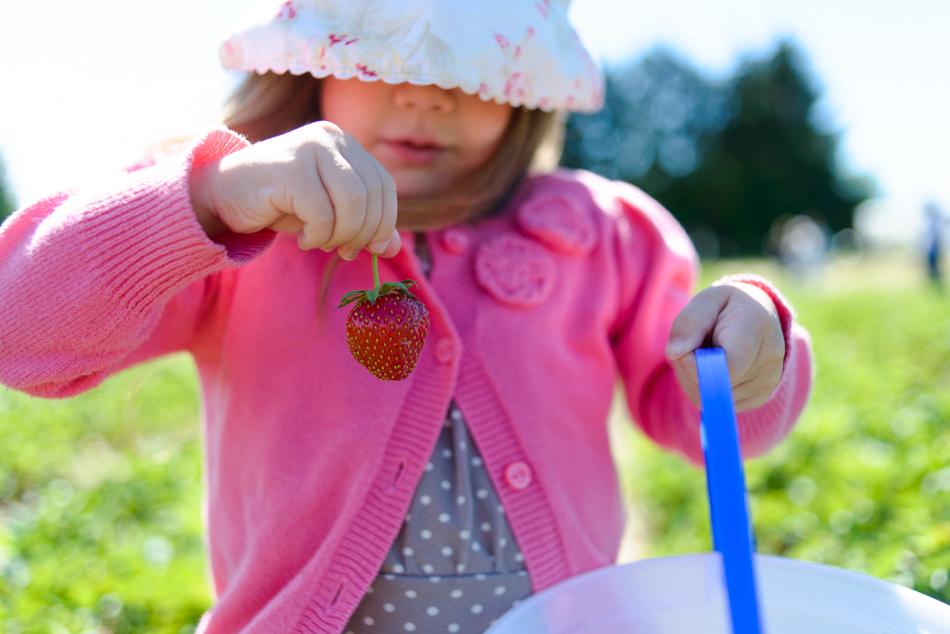 hemmeter strawberry picking-008