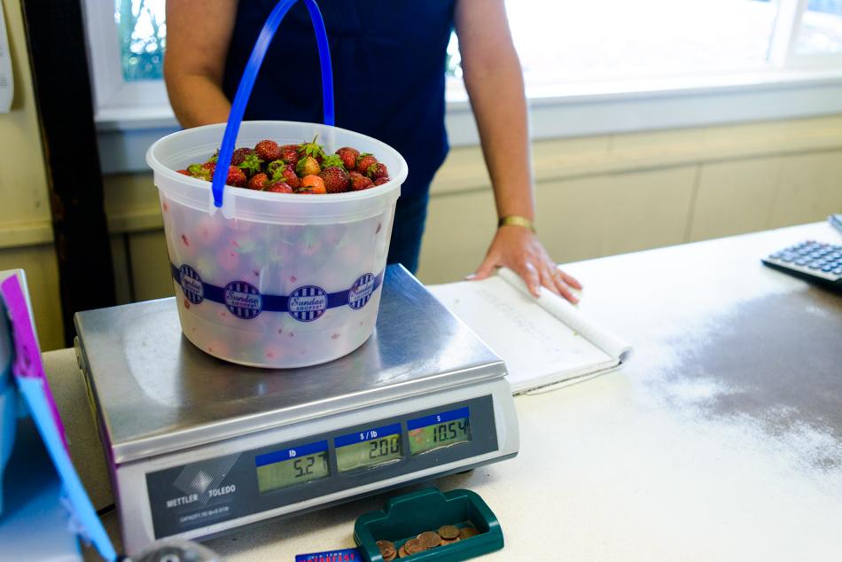 hemmeter strawberry picking-012